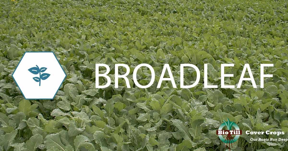 Broadleaf Products