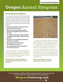 Terminating Annual Ryegrass