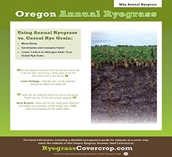 Why Annual Ryegrass